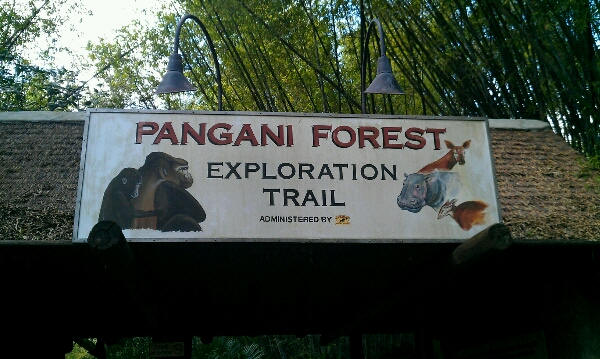Fun Find Friday Pangani Forest