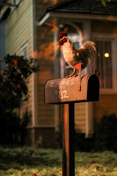 living with the land mailbox