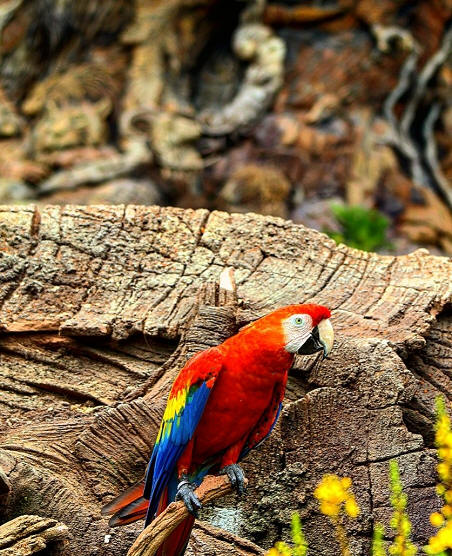 Tree of Life parrot