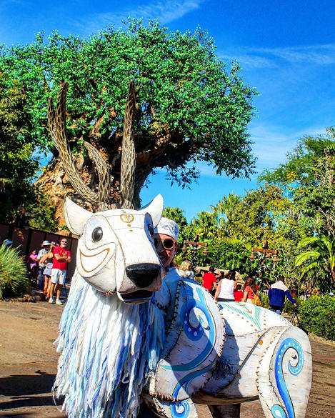 Animal Kingdom Christmas