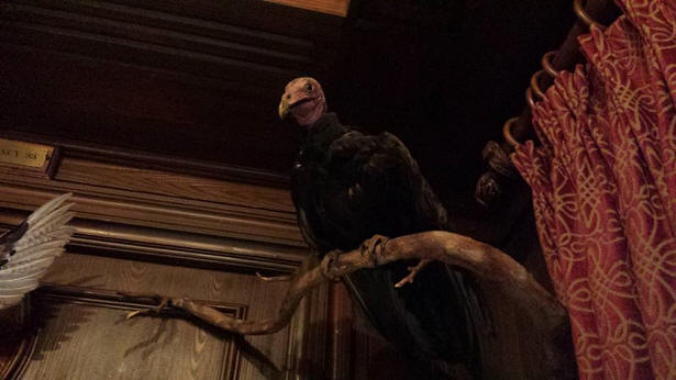 Club 33 Turkey Vulture